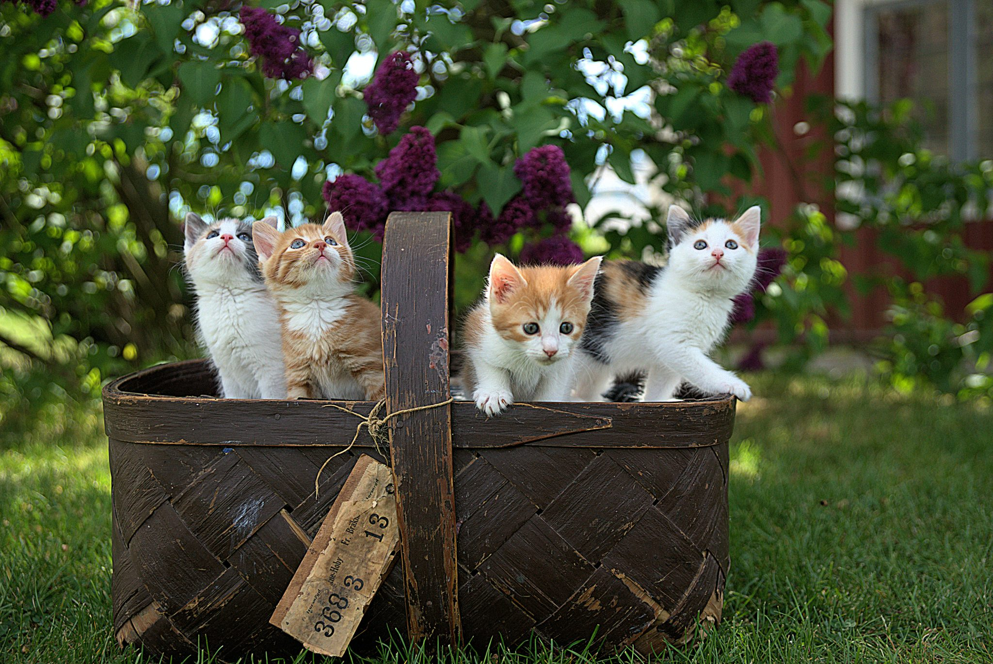 picture of kittens in a basket